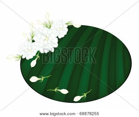 Fresh Jasmine Flowers On Green Banana Leaf