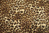 stock photo of leopard  - closeup wild animal pattern background or texture - JPG