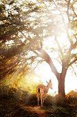 stock photo of garden eden  - Goat in wonderful forest - JPG