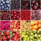 picture of sweet sixteen  - Berries  - JPG