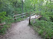 picture of wildcat  - Iron Walkway Bridge at Wildcat Canyon in Spring at Starved Rock - JPG
