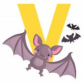 picture of vampire bat  - The letter v for the animal vampire bat - JPG