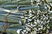 picture of hacienda  - A farm area in the countryside where they grow and process Agave, producing fibre. Stems of the Agave cactus on the trailer of a small truck IN  YUCATAN. ** Note: Soft Focus at 100%, best at smaller sizes - JPG