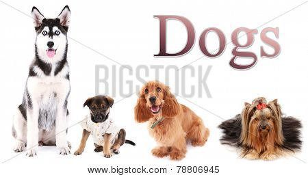 Dog collage and text Dogs