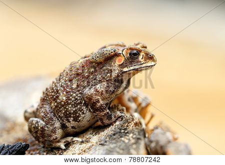 Beautiful Photos Toad