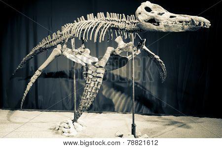 Dinosaur Skeleton - Liopleurodon