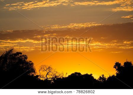 Sunset in pantanal with black skyline and orange sky