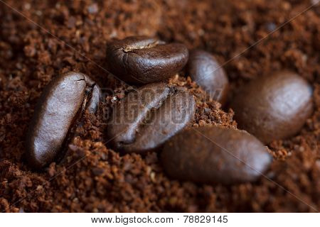 Three roasted coffee beans on ground coffee.