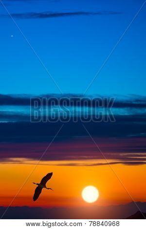 Heron In Flight At Sunset