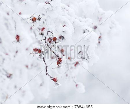 Icy Winter Bright Rose Hips