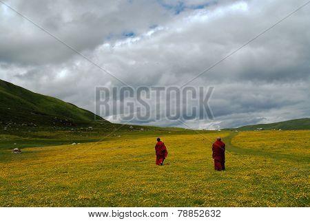 Gannan Grassland
