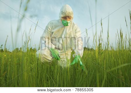 Scientist Examining Green Plants On Summer Field