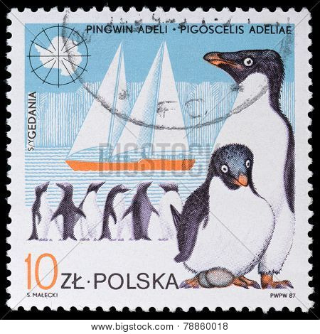 Shows Penguin