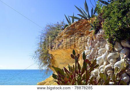 Cactus garden on Armacao De Pera Beach, Portugal