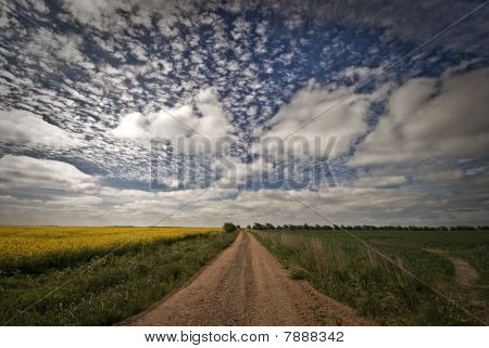 Gravel Road And Fields