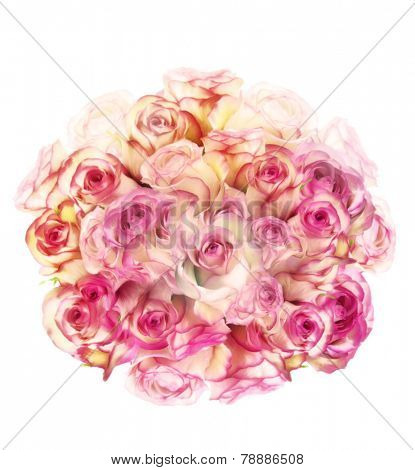Digital Painting Of Rose Flowers On White Background