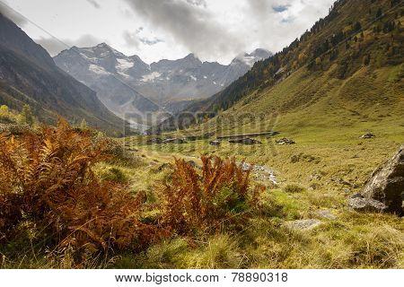 Pastures in autumn