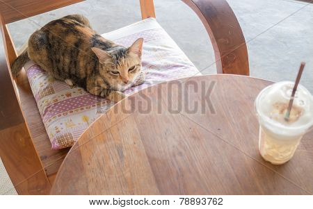Cat Sitting On Coffee Shop Wooden Chair