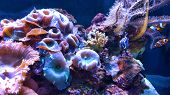 picture of clown fish  - aquarium with sponges coral and clown fish