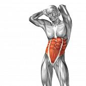 picture of human muscle  - Concept or conceptual 3D abdomen or chest human anatomy or anatomical and muscle isolated on white background - JPG