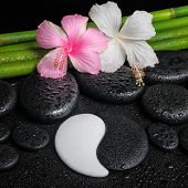 stock photo of yin  - spa setting of white pink hibiscus flowers symbol Yin Yang and natural bamboo on zen basalt stones with drops closeup - JPG