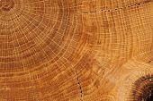foto of cutting board  - Oak board with growth rings close up macro - JPG