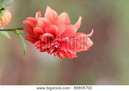 Beautiful indian  flower