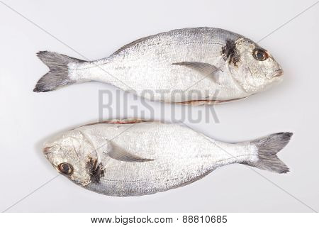 Two Sea Breams Fish
