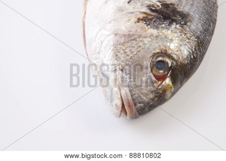Sea Bream Head Detail