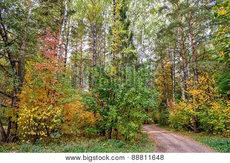 Autumn Forest And Country Road