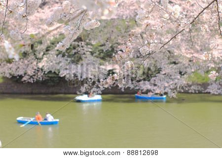 TOKYO JAPAN - MARCH 30 ,2015 : Chidorigafuchi is a moat located in the northwest of the Imperial Pal