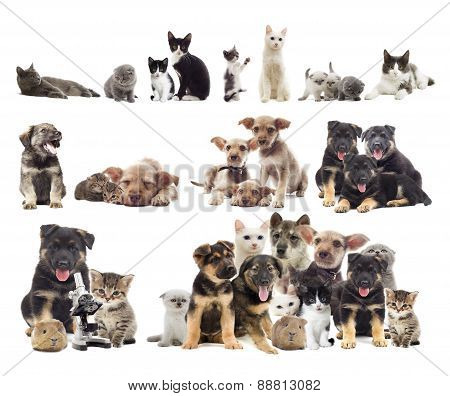 Set Of Puppies And Kittens