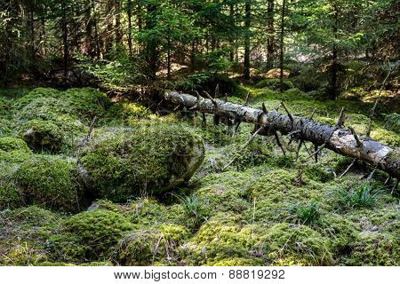 Stones And Fallen Tree Covered With Moss