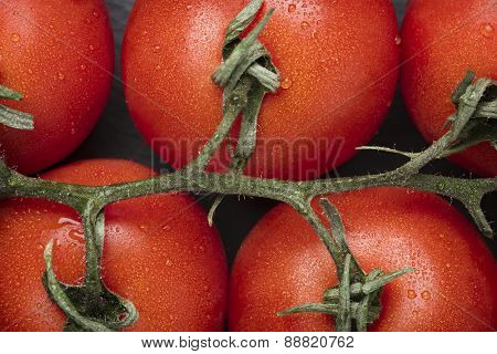 Macro close up of fresh red truss tomatoes.