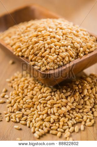 Golden wheat grains overflowing from a bowl.