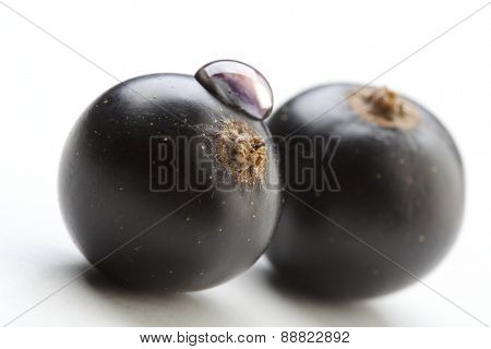 Close up of black currants