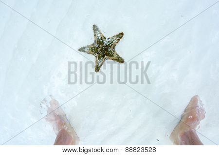 Starfish and the feet of man