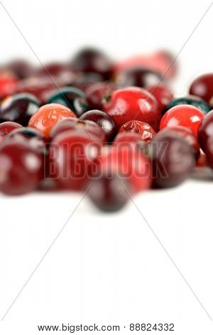 Studio shot of cranberries on white background