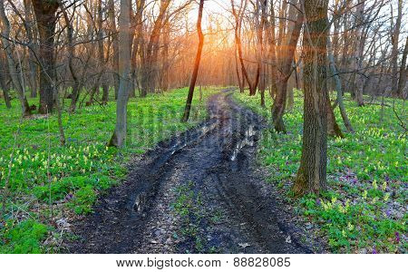 Dirt road in spring forest among flowers meadow