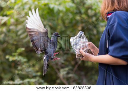 Girl feeding a Pigeon in a park