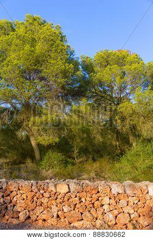 Majorca Mondrago Mondragon Natural Park pines and masonry Mallorca Balearic Island