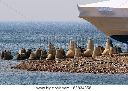 Cape marine