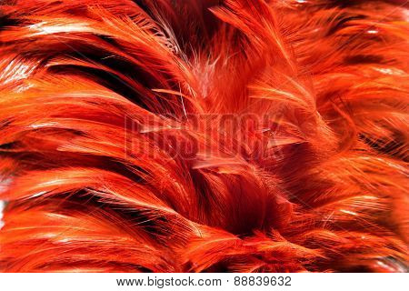 Red Fur From Feather