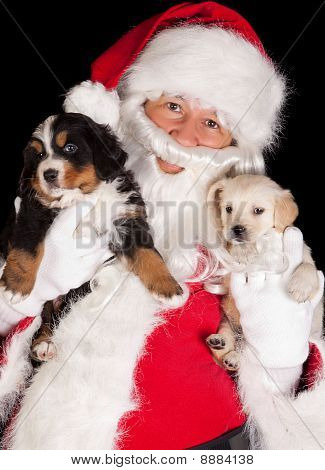 Santa With Two Puppies