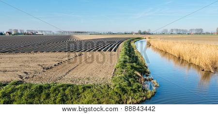 Potato Ridges On A Dutch Farmland Near The Water