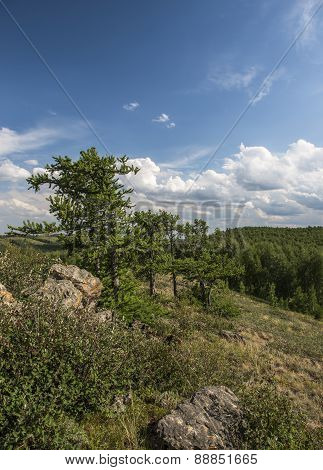 Larch tree in the Ural Mountains.