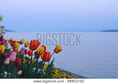 Flowers on the lake in the evening