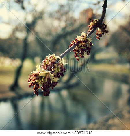 Buds At Springtime, Vintage Retro Floral Background.