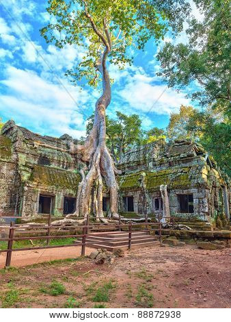 Ta Prohm Temple at Siem Reap Cambodia