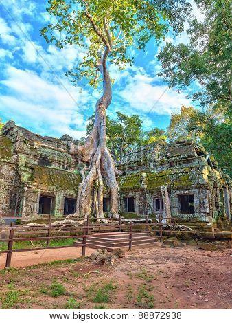 Ta Prohm Temple at Siem Reap Cambodia